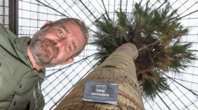 Gegara Masalah Ini, Pohon Palem Berusia 2 Abad Riwayatnya Bakal Tamat