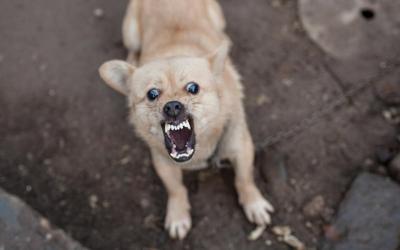 Hari Rabies Sedunia, Yuk Kenali Penyakit Berbahaya yang Ditularkan Anjing dan Kucing