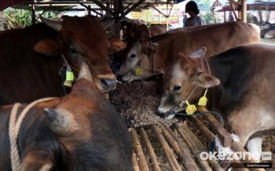 Dosen UGM: Indonesia Punya Peluang Besar Kembangkan Peternakan Sapi