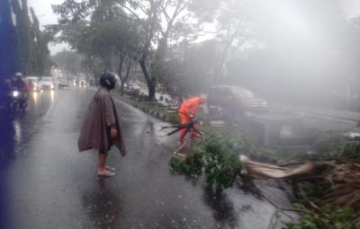 Bogor Dilanda Angin Kencang, 9 Pohon Tumbang dan 7 Rumah Rusak