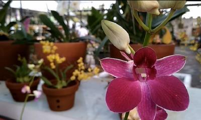 3 Jenis Bunga yang Cocok untuk Perawatan Kulit