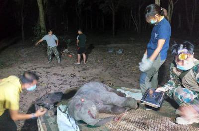 Jadi Korban Tabrak Lari, Anak Gajah Kesasar Mati Mengenaskan di Jalan