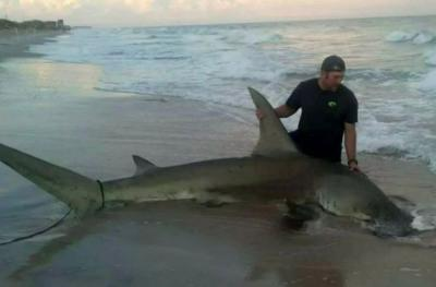 Gokil! Nelayan Tangkap Hiu Martil 3 Meter lalu Diajak Selfie di Bibir Pantai