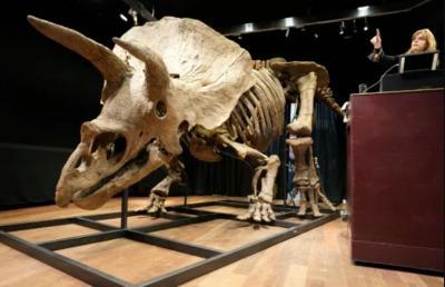 Big John, Fosil Triceratops Terbesar di Dunia Itu Laku Rp109 Miliar
