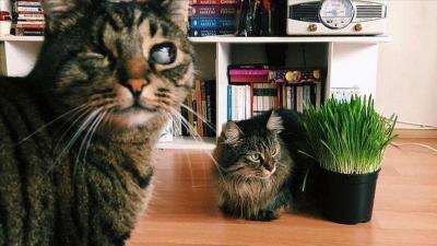Putus Cinta, Pasangan Ini Gugat Hak Asuh 2 Kucingnya ke Pengadilan
